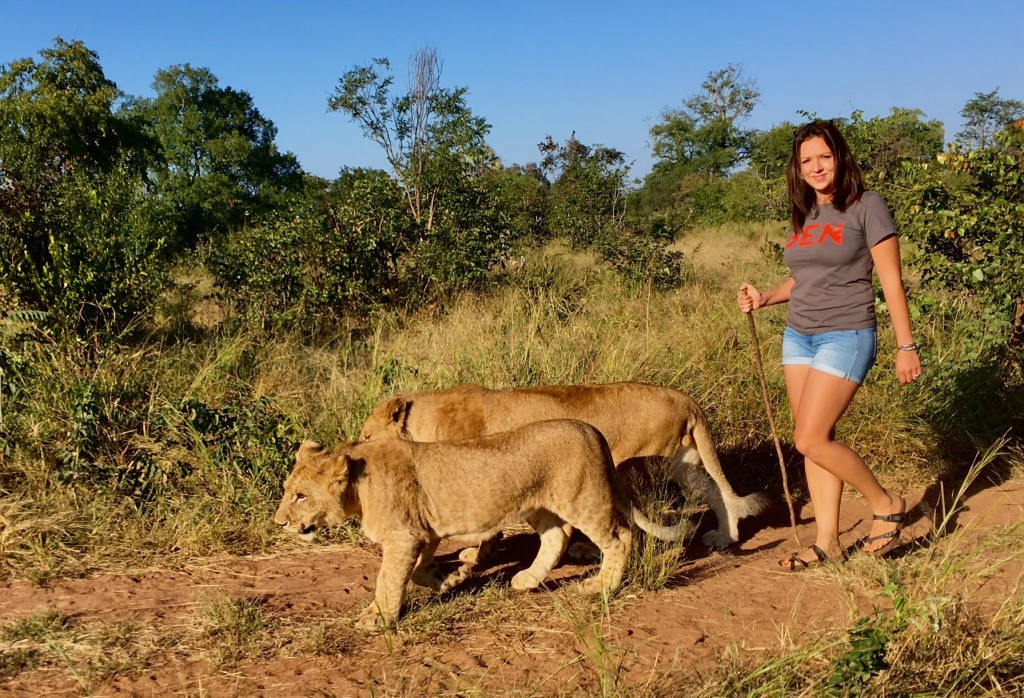 Na procházce se lvy