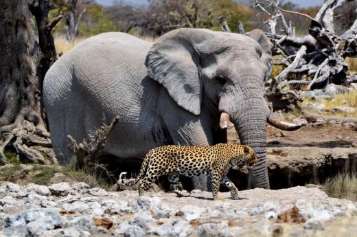 na safari v jižní Africe