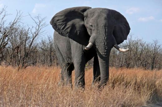 safari v jižní Africe