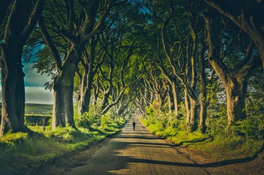 Alej stromů The Dark Hedges v Severním Irsku