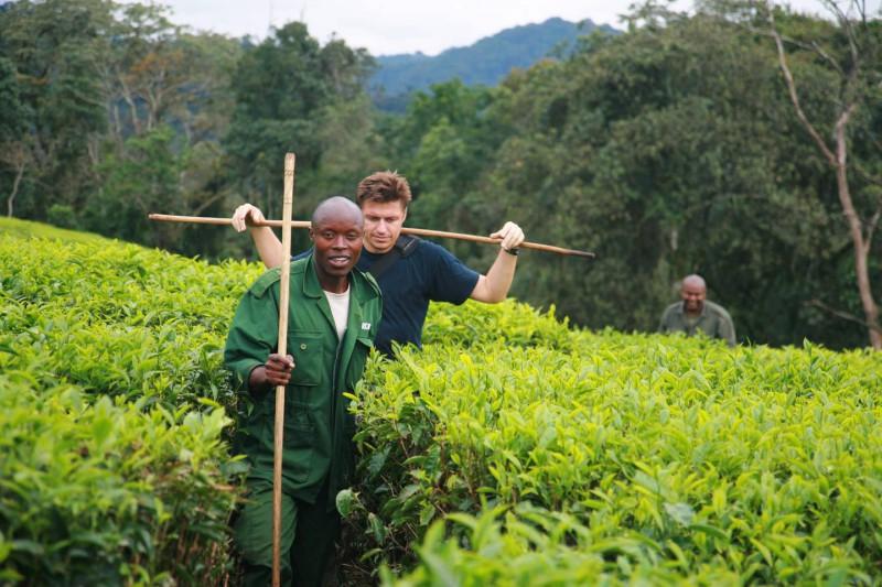Přechod čajovníkovou plantáží v horách Rwandy.