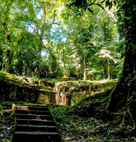 Starodávné chrámy obrostlé džunglí.