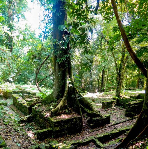Tisíc let staré budovy porostlé tropickým deštným pralesem.