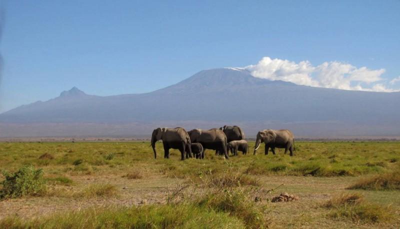 Národní park Amboseli – Safari pod Kilimandžárem.