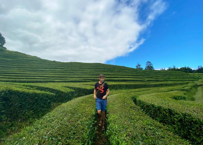 Kaskádovité čajové plantáže.