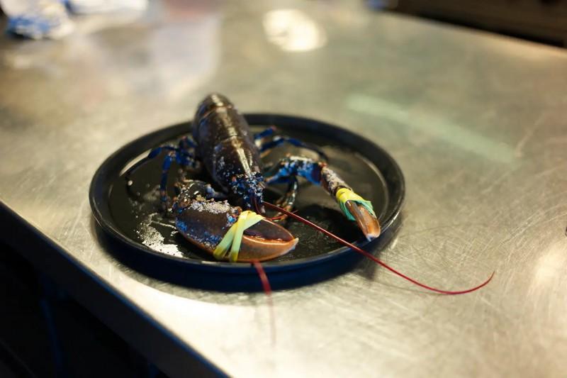 Živý krab na talíři připravený k uvaření.