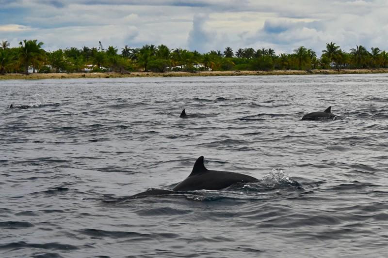 Plavba s pozorováním delfínů je dokonalý zážitek.