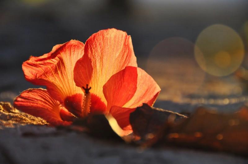 Barevný květ na Maledivách.