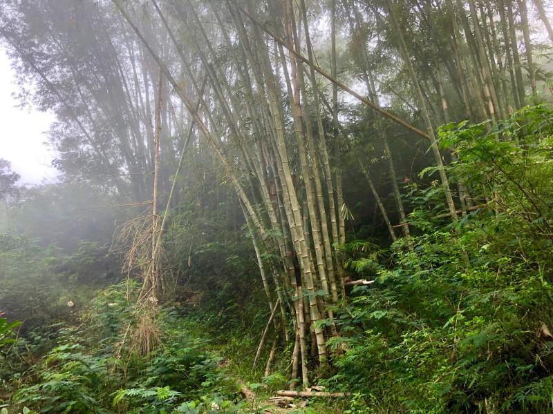 Bambusy v horách