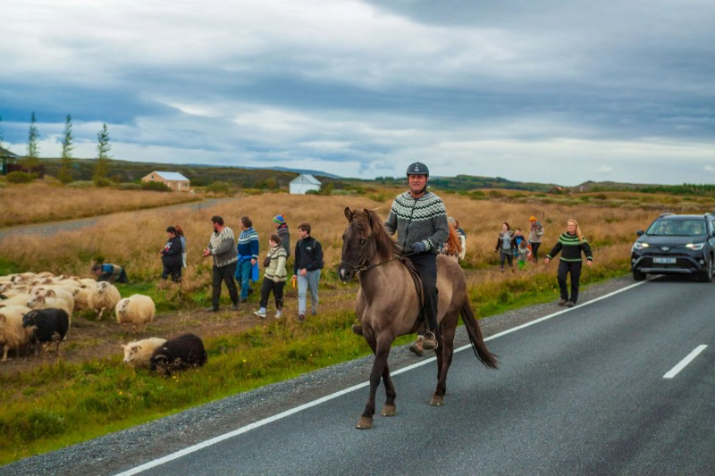 Muž na koni a místní shánějící ovce z pastvin.