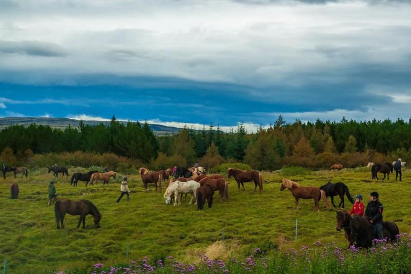 Koně na pastvě.