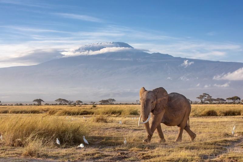 Slon pod Kilimandžárem.