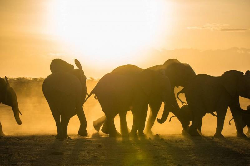 Sloni pod Kilimandžárem v národním parku Amboseli.