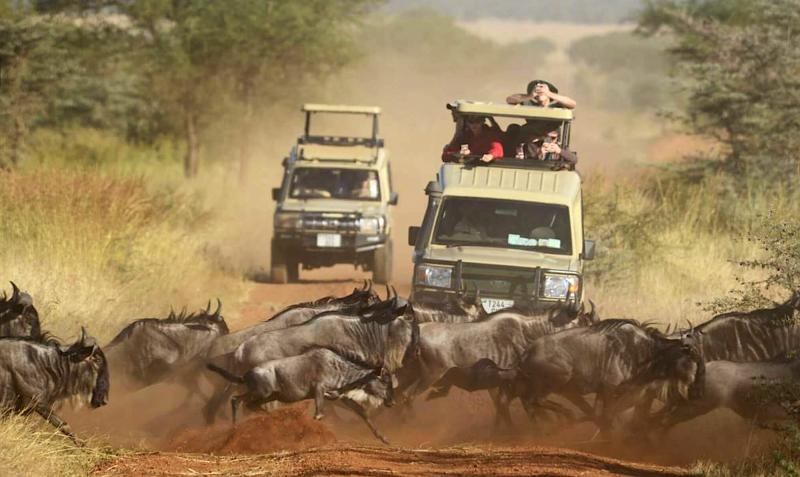 Velká migrace pakoňů v Masai Mara.