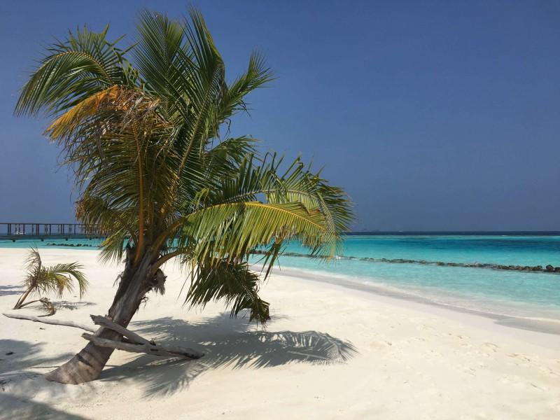 Pláž s palmou na Maledivách