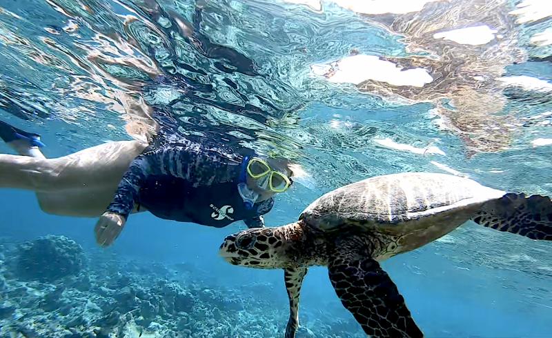 Šnorchlování se želvami.