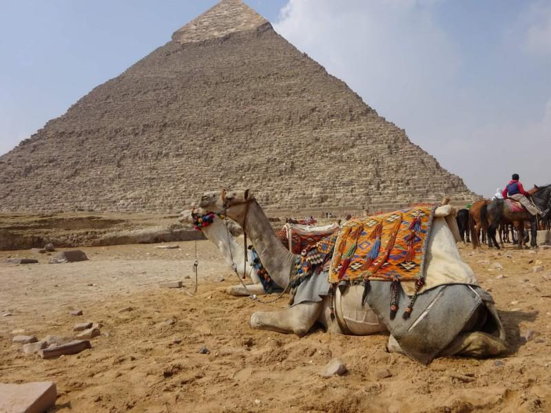 Velbloudi před Cheopsovou pyramidou