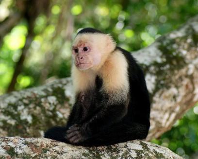 Makakové jsou jedním z druhů opic, který zde žije volně v přírodě