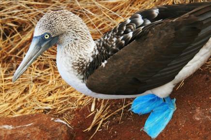 Vzdálenost, kterou jiní živočichové nedokázali překonat, a proto Galapágy zůstaly tak výjimečným místem