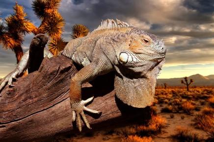 Tyto zvířata se přizpůsobila podmínkám na Galapágách