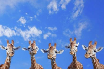 V  Masai Mara potkáte nejvyšší obyvatele této oblasti