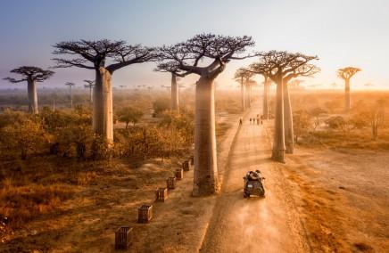 Okouzlí Vás baobaby podél cest