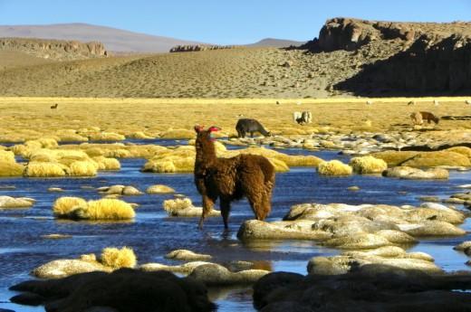 Nejkrásnější pohledy na Bolívii