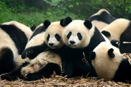 Poznáme Čínu a její pandy