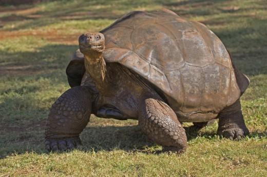 Vítejte na Galapágách