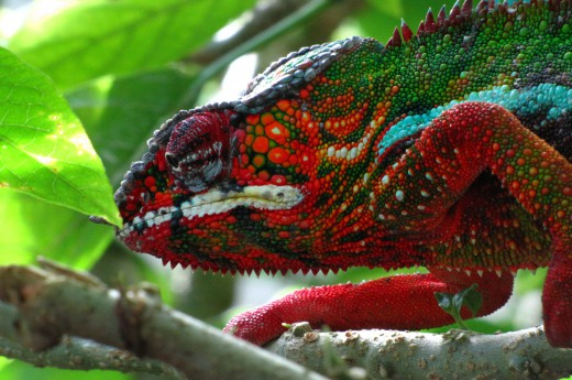 Fauna Madagaskaru je jedinečná