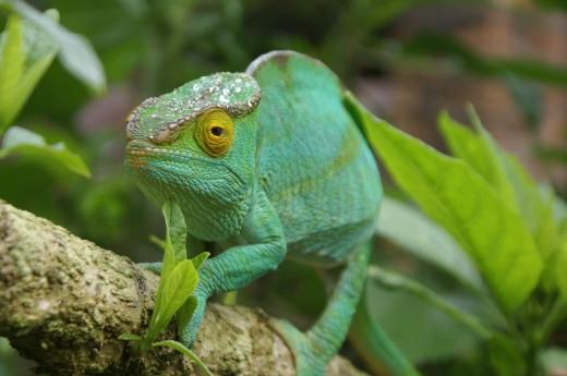 Na Madagaskaru uvidíte zvířata, jak z jiného světa