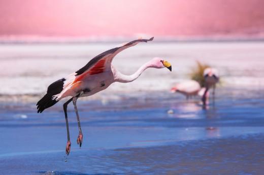 Divoká příroda Jižní Ameriky