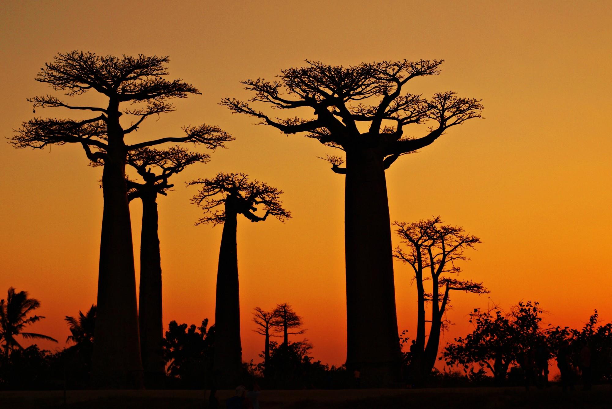 Vstupte do světa baobabů s CK SEN