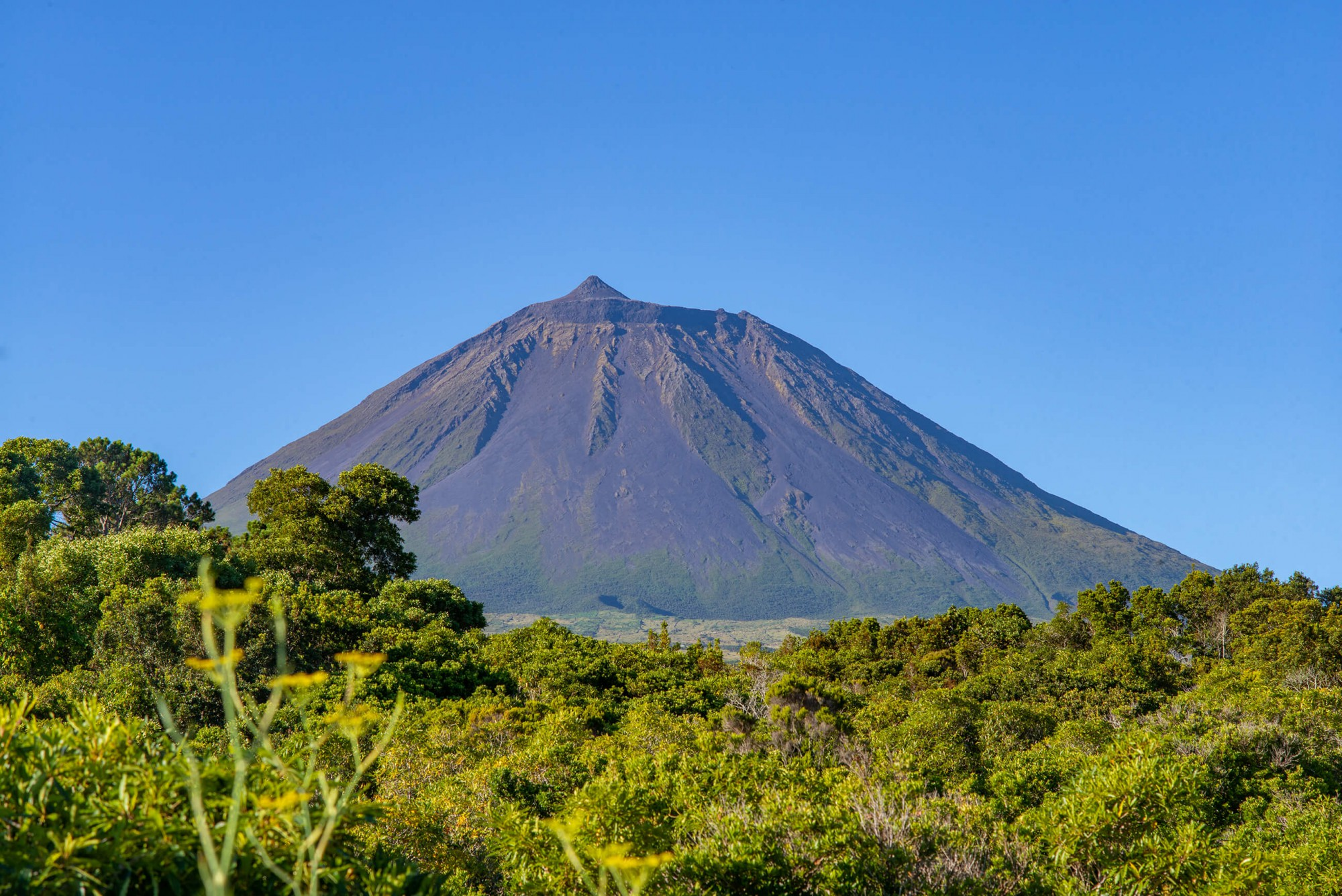 Pico je ostrov tří nej: největšího množství velryb, nejlepšího vína a nejvyšší sopky