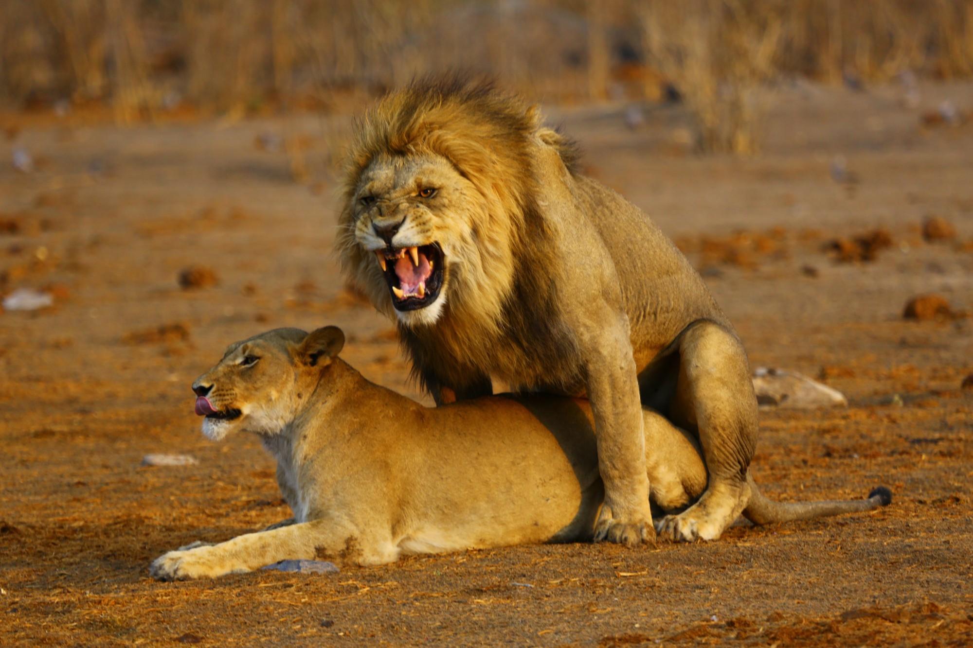 S CK SEN poznáte teritorium krále zvířat