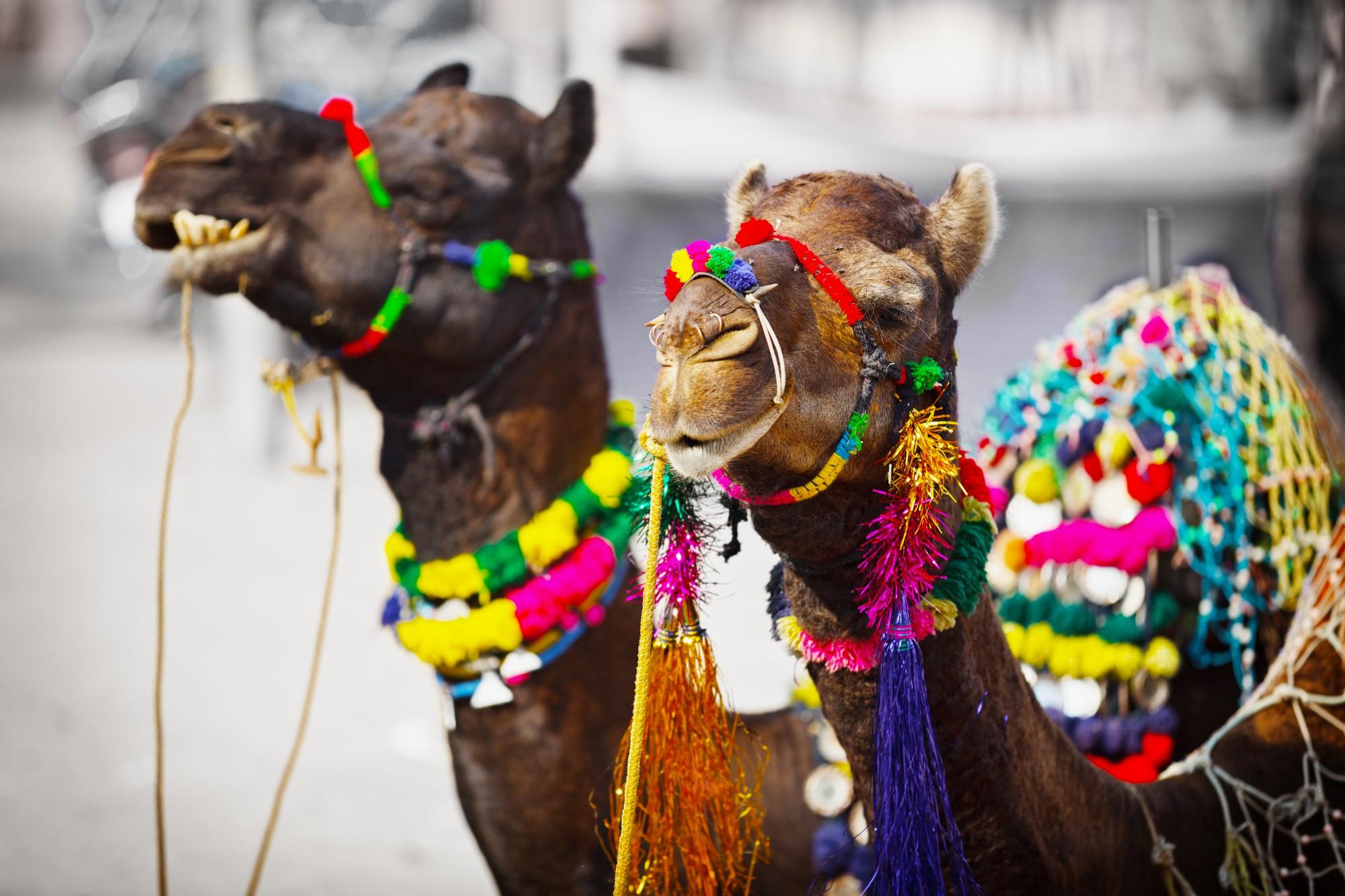 Vítejte v barevném Radžastánu