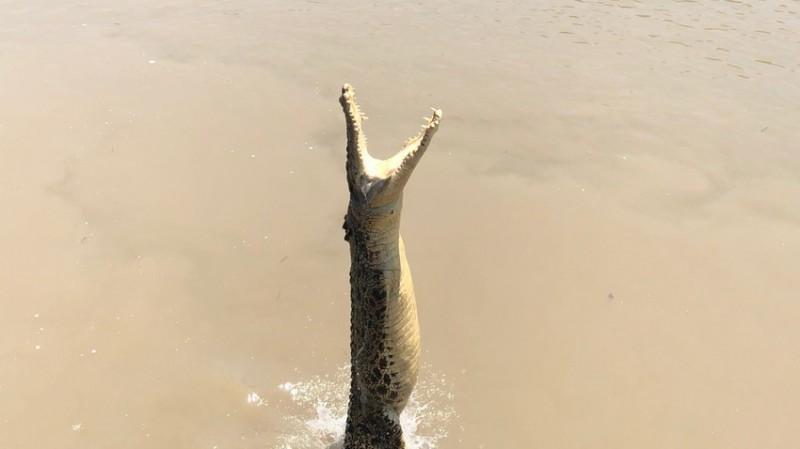 Skákající krokodýly