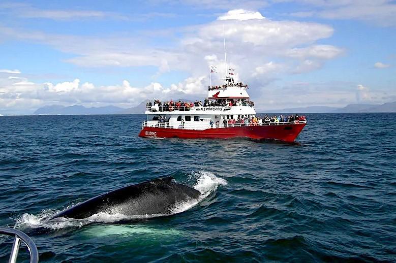 Plavba za pozorováním velryb