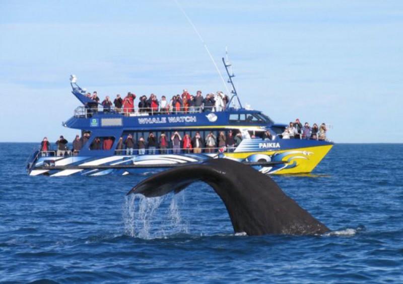 Plavba za velrybami Kaikoura