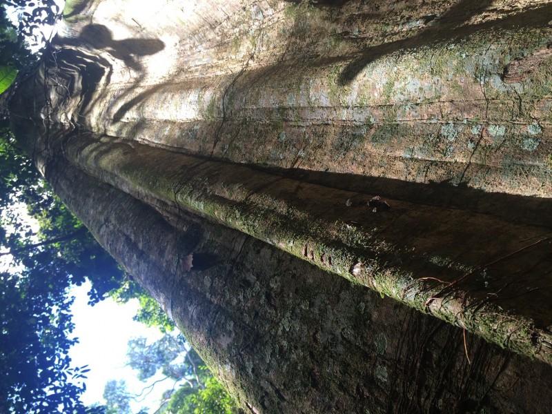 Surinam - Národní park Brownsberg (Amazonský prales)