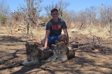 jihoafrická velká kočička