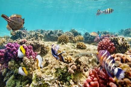 Austrálie, velký bariérový útes