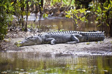 Řeky a jezera v Austrálii jsou domovem dvou druhů krokodýlů