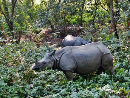 Asie, safari v Nepálu