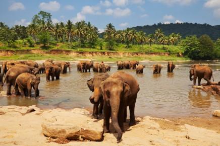 Pinnawala sloní sirotčinec, Srí Lanka