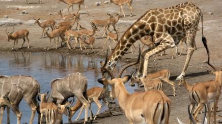 Národní park Kruger v Africe