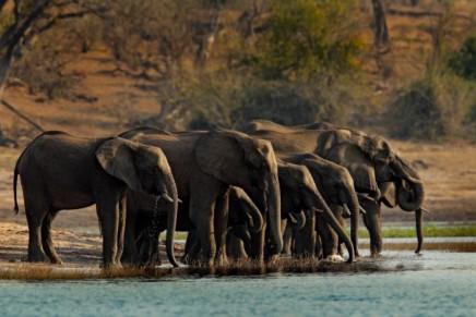 safari v národním parku Chobe