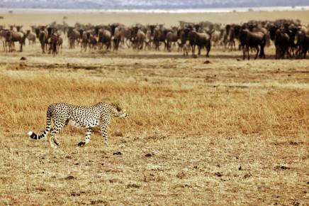 Keňa Nairobi