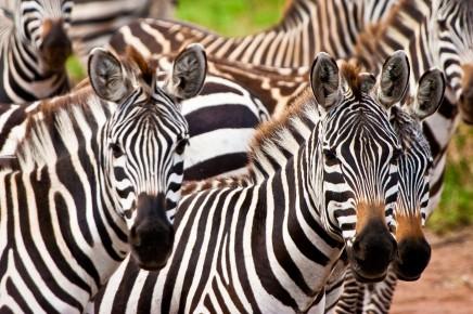 Národní park Etosha, Namibie