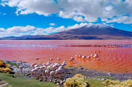 bolivijské Altiplano